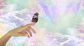 Mindfulness Moment with a Butterfly. Closed wing butterfly resting on the extended index finger of a female hand with a rainbow bokeh woodland background and stock image