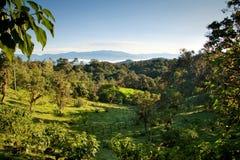 Mindo, bosque de la nube de Ecuador fotografía de archivo
