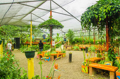 MINDO, ECUADOR - AUGUST 27, 2017: Unidentified people taking pictures and enjoying the plants inside of a greenhouse stock photo