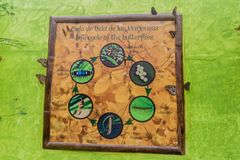 MINDO, ECUADOR - JUNE 27, 2015: Butterfy life cycle poster in Mariposario The Butterfly House in Mindo, Ecuad. Or stock photo
