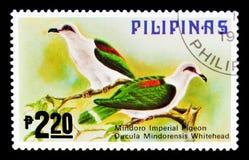 Mindorensis di Ducula del Imperiale-piccione di Mindoro, fauna - serie degli uccelli, circa 1979 Fotografia Stock