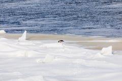 Mindre kulle och isflaken på vinterfloden royaltyfri foto