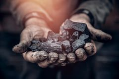Free Miner Holds Coal, Palm Texture. Concept Mining, Black Stone. Stock Photography - 151331822