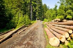 Mineração na floresta Imagens de Stock Royalty Free