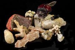 Minerais isolados, fósseis e besouro enorme tropical Fotografia de Stock Royalty Free