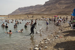 Mineral Beach, Dead Sea, Israel Royalty Free Stock Photos