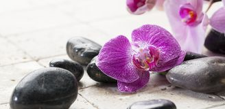 Mineral decor with black pebbles and orchid for spa center. Mineral decor with pink flower for beauty treatment Stock Images