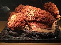 Minerale nel museo Fotografia Stock