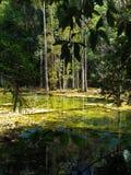 Mineralisk ström i tropisk skog Arkivbild