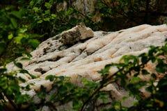 Mineraliska insättningar av Pegmatite i Ukraina Fotografering för Bildbyråer