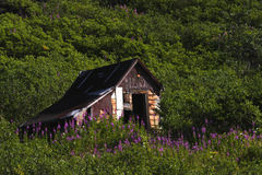 Miners Cabin Royalty Free Stock Photography