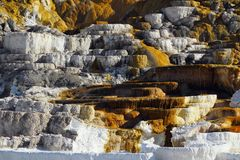 Minerva Terrace Details, parc national de Mammoth Hot Springs, Yellowstone, Wyoming image stock