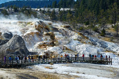 Minerva Terrace, Mammoth Hot Springs Images stock