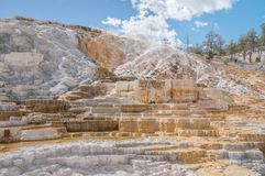 Minerva Terrace no parque nacional de Yellowstone Imagem de Stock Royalty Free