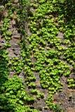 Ming Dynasty City Wall in de lente Stock Foto