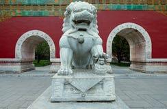 Ming Porzellan des vorzüglichen Carvings Löwinlöwes Stockfotos