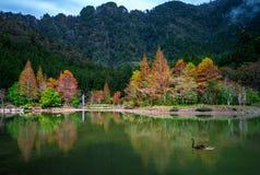 Mingchi-Erholung im Walds-Bereich lizenzfreie stockbilder