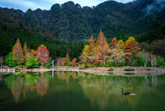 Mingchi forest recreation area. In yilan, taiwan Royalty Free Stock Images