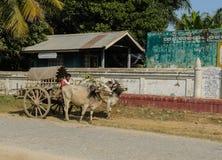 Mingun cow Taxi, Myanmar Royalty Free Stock Photography