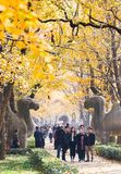 Autumn in Nanjing Mingxiao Mausoleum stock photography