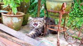 Minha Cat Yawns As eu aproximei-o fotos de stock royalty free