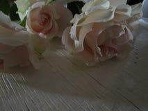 Minha flor da mola imagem de stock