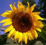 Minha luz do sol fotografia de stock royalty free