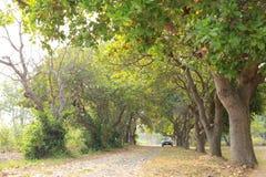 Minha maneira, minha viagem, paisagem Imagens de Stock Royalty Free