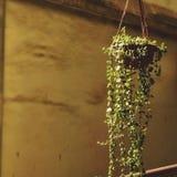 Minha planta dos favoritos de meu jardim Imagens de Stock