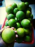 Minhas bolas da árvore de limão Imagem de Stock