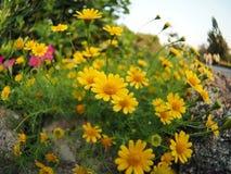 Minhas flores da esperança Foto de Stock Royalty Free