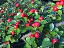Minhas plantas Imagem de Stock