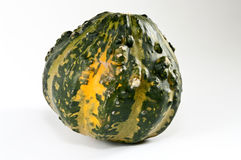 Mini abóbora verde Imagem de Stock Royalty Free