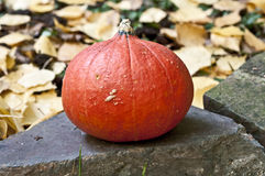 Mini abóbora vermelha Imagens de Stock Royalty Free