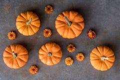 Mini abóboras e cabeças de flor alaranjadas Fotografia de Stock