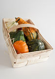 Mini abóboras em uma cesta imagens de stock royalty free