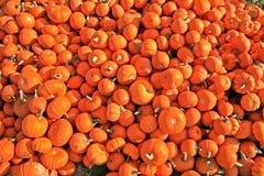 Mini abóboras empilhadas Fotografia de Stock