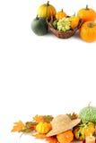 Mini abóboras no fundo branco isolado Halloween Imagem de Stock