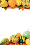 Mini abóboras no fundo branco isolado Halloween Fotos de Stock Royalty Free