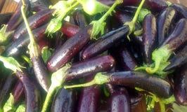 Mini- aubergine Arkivbilder