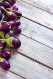 Mini- auberginebakgrund Arkivfoton