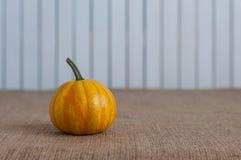 Mini autumn orange pumpkin on sacking table and Stock Photos
