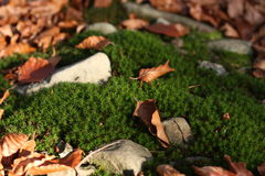 Mini autumn scenery Stock Image