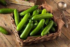 Mini Baby Cucumbers organico crudo Fotografia Stock