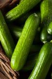 Mini Baby Cucumbers organique cru Photographie stock