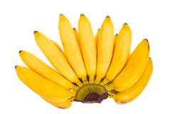 Mini bananas isoladas no fundo branco Vista superior Configuração lisa Fotos de Stock Royalty Free