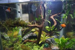 mini basic beginer for aquascape with guppy fish and plant