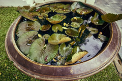 Mini bassin pond Stock Images