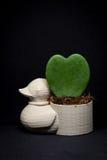 Mini- blomkruka för and med hjärtablomman som tas i studion Royaltyfri Fotografi