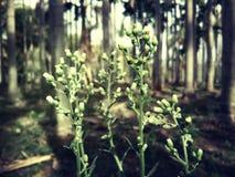 Mini- blommor Arkivfoton